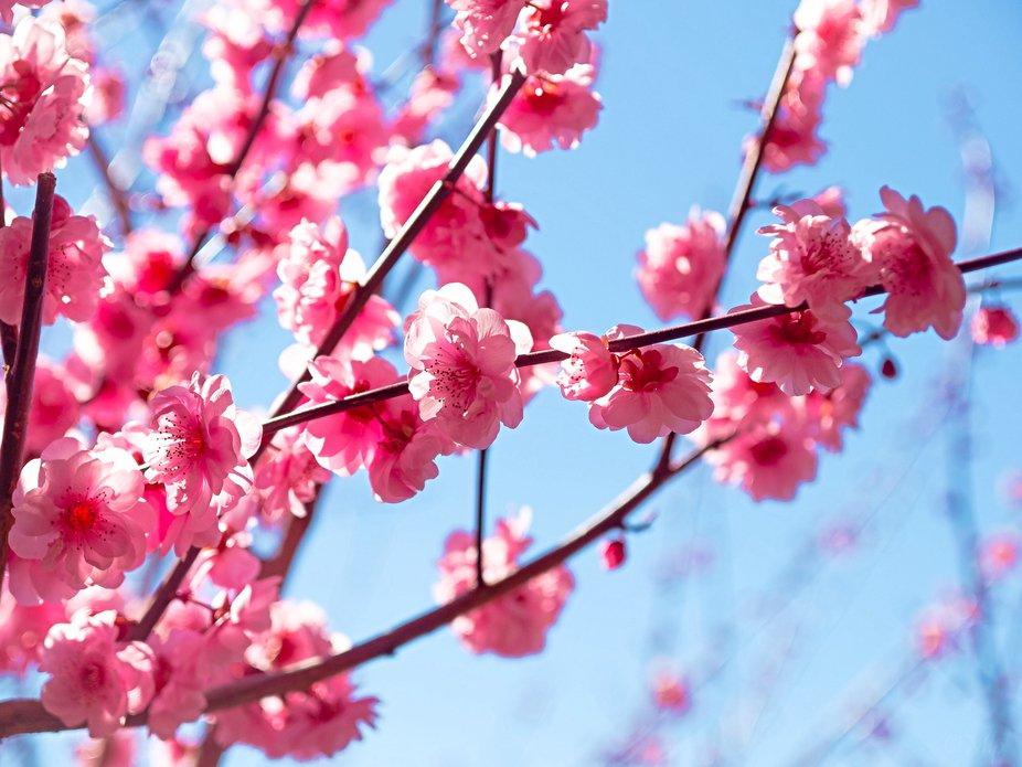 Blossom beauty!