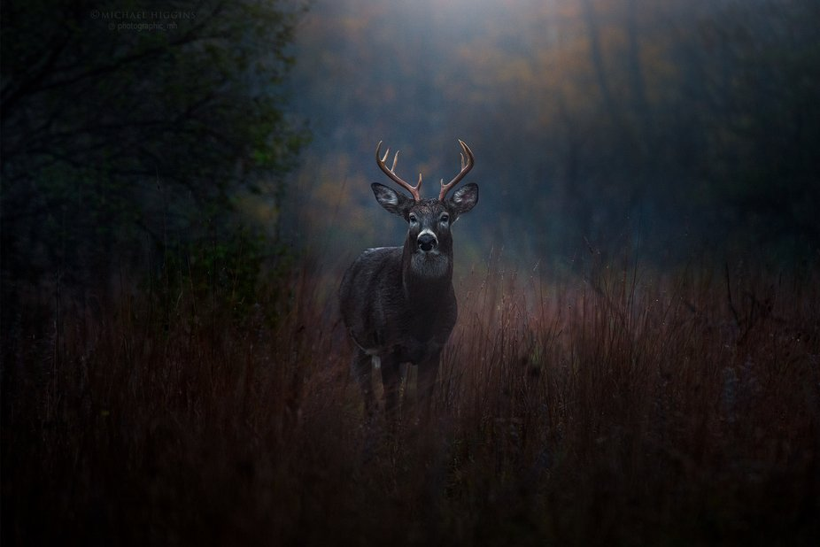 I wasn't looking to photograph wildlife on this foggy morning; my aim was to create some...