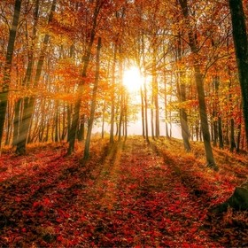 Autumn Sunbeams