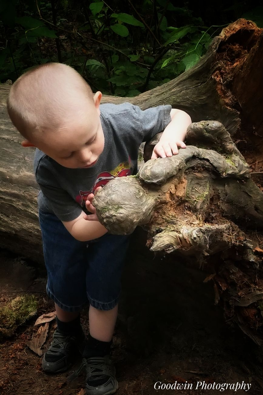 My boys like to search for dinosaurs in the woods.