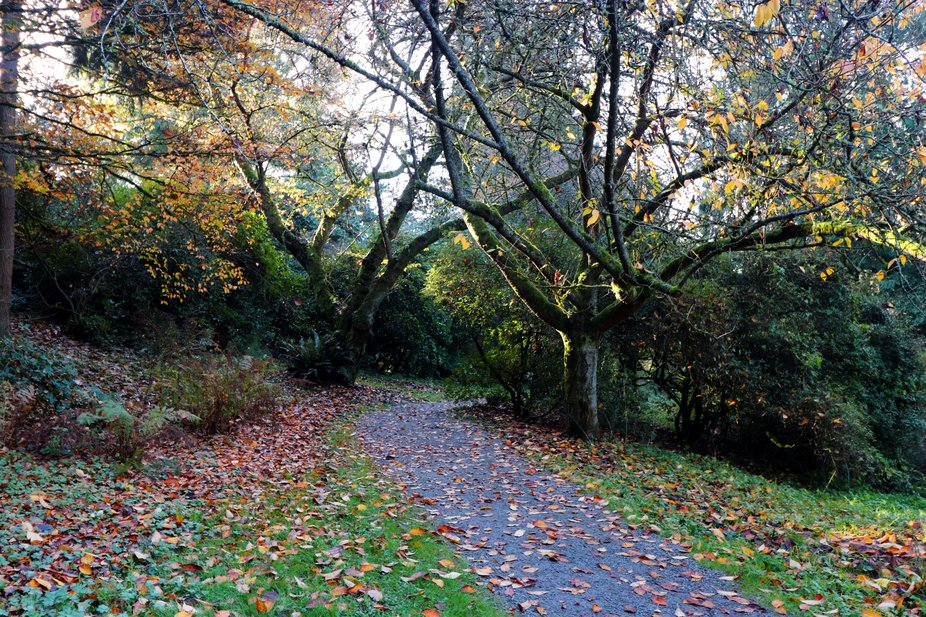 fall, nature, botanical gardens,trees, autumn colors, cold day, windy, golden leaves, Pacifiic  N...