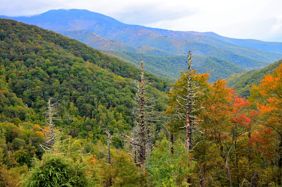 Along the Blue Ridge Parkway in NC