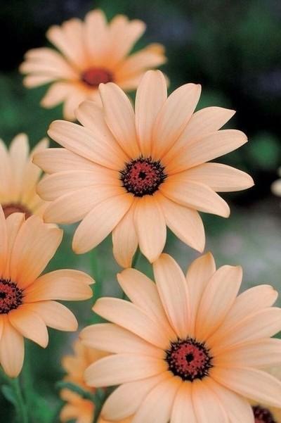 Blooming beautiful