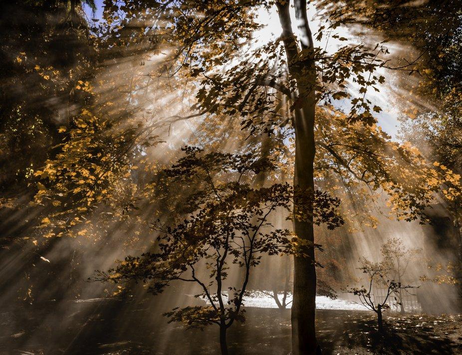 Sunlight bursting through the trees at Legacy Gardens