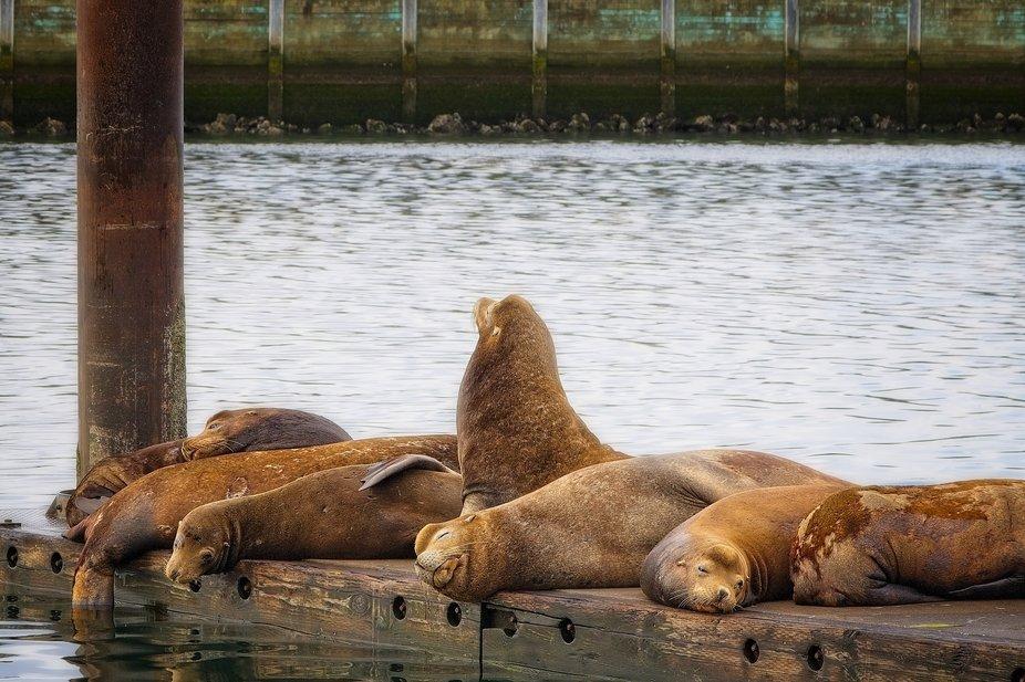Resting on the docks in Newport, Oregon...