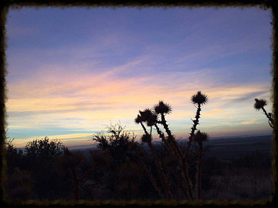 A thistles sunrise
