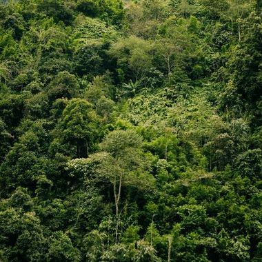 Dschungelfieber