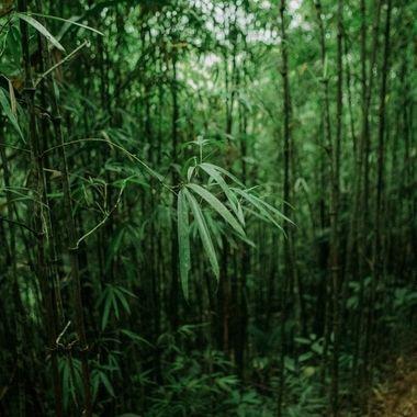 Bamboo heaven