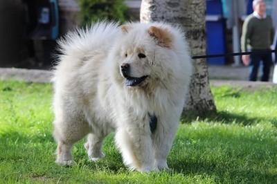 #dog #dog #puppy #pup #TagsForLikes #cute #eyes #instagood #dogs_of_instagram #pet #pets #animal #animals #petstagram #petsagram #dogsitting #photooftheday #dogsofinstagram #ilovemydog #instagramdogs #nature #dogstagram #dogoftheday #lovedogs #lovepuppies