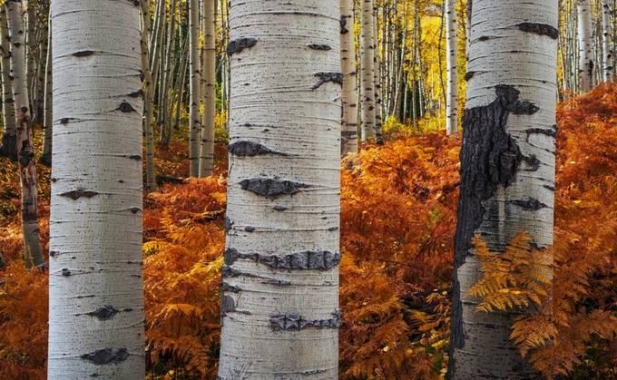 Last Embrace by mattpayne - Tall Trees Photo Contest