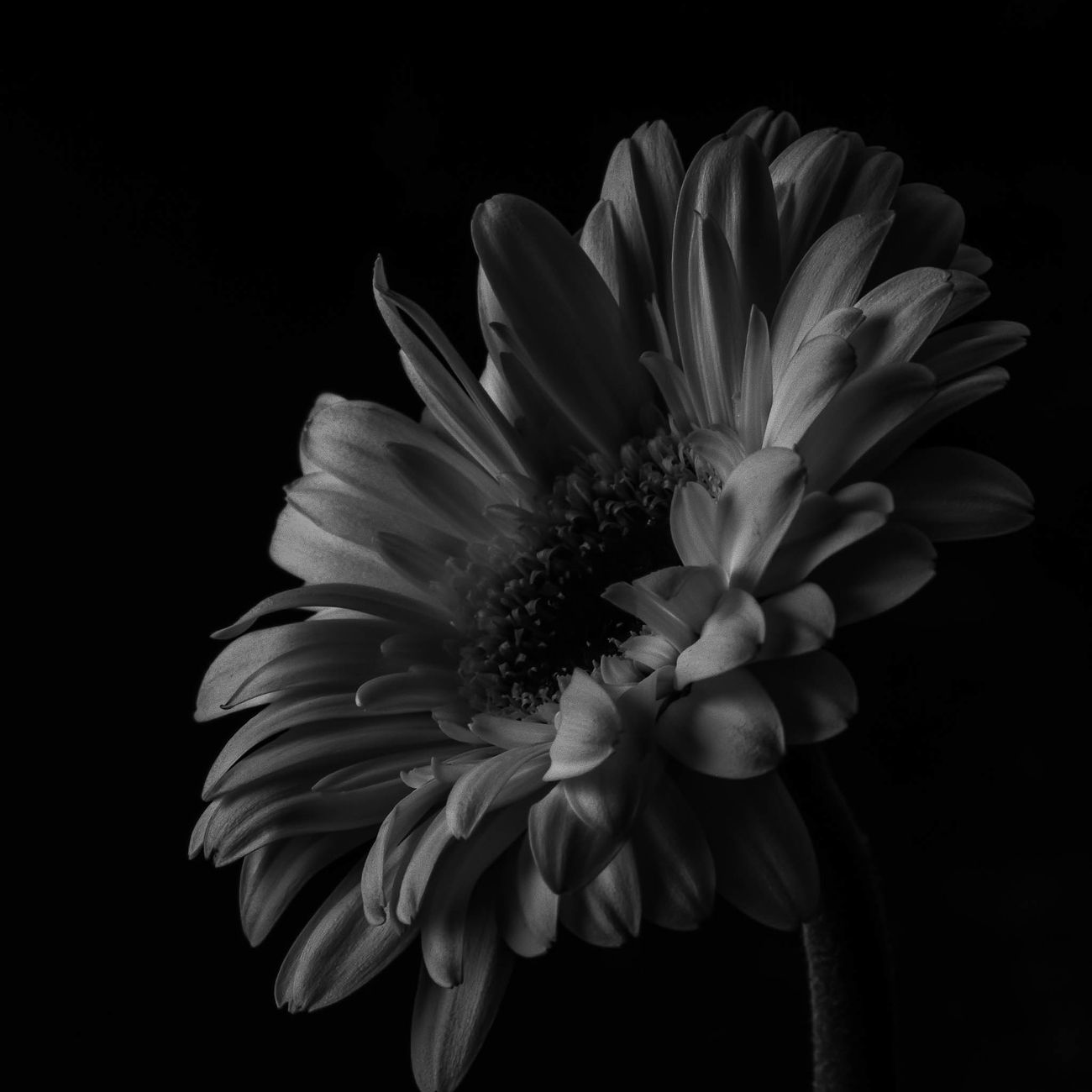 A black and white flower