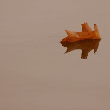 Leaf floating on water in Cootes Paradise