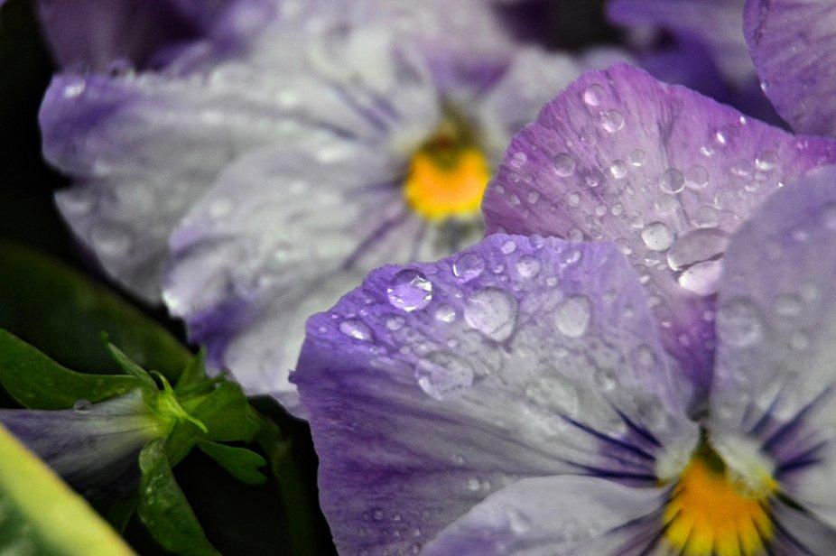Raindrop flowers