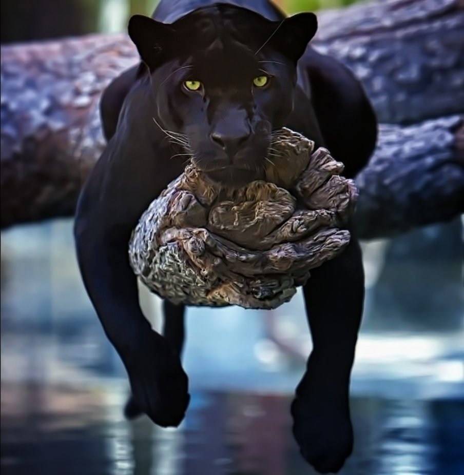 Black Cat by dawnvandoorn - Covers Photo Contest Vol 51