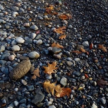 Shot at the Scarborough Bluffs, leaves lie on the beach pebbles like drops of paint.