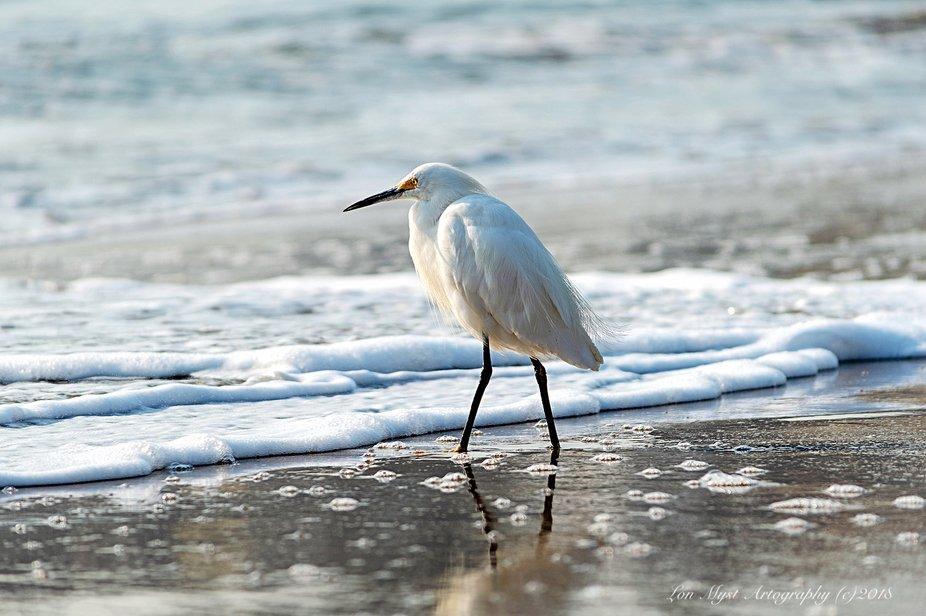The early bird gets the Sand Fleas!