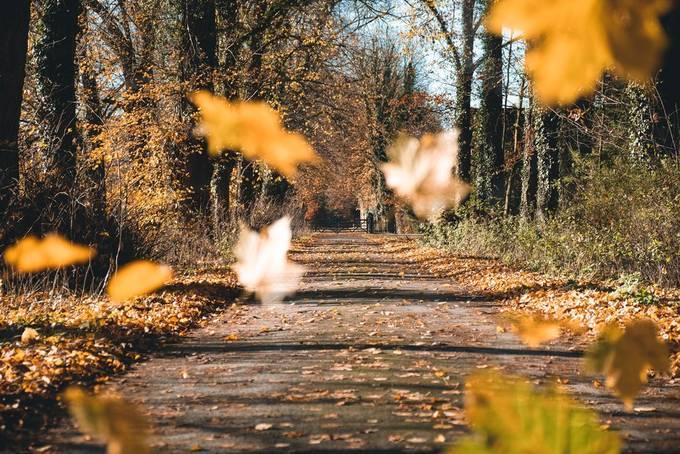 Falling leaves by bielefoto - Straight Roads Photo Contest