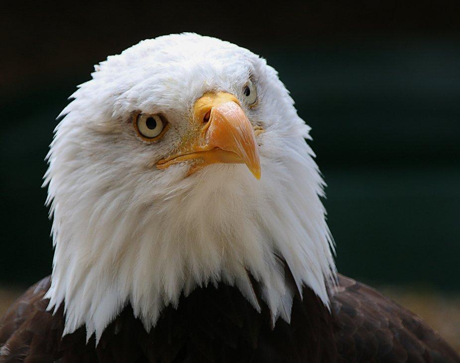Eagle Expression
