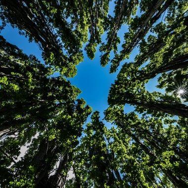 Portal of Trees