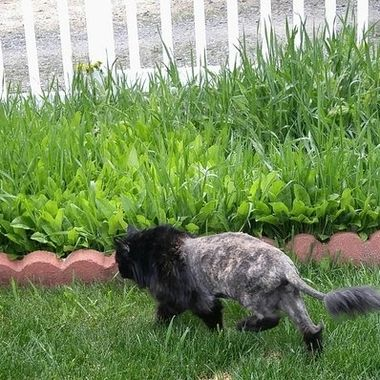Sassy was 19..8 when she passed. She loved her haircut in the summer and fits the roll perfect.