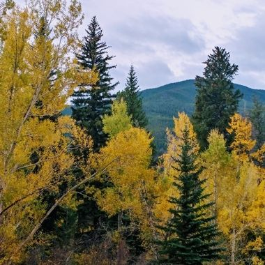 Driving around admiring the colors.  The bright yellow from the aspens are.my favorite