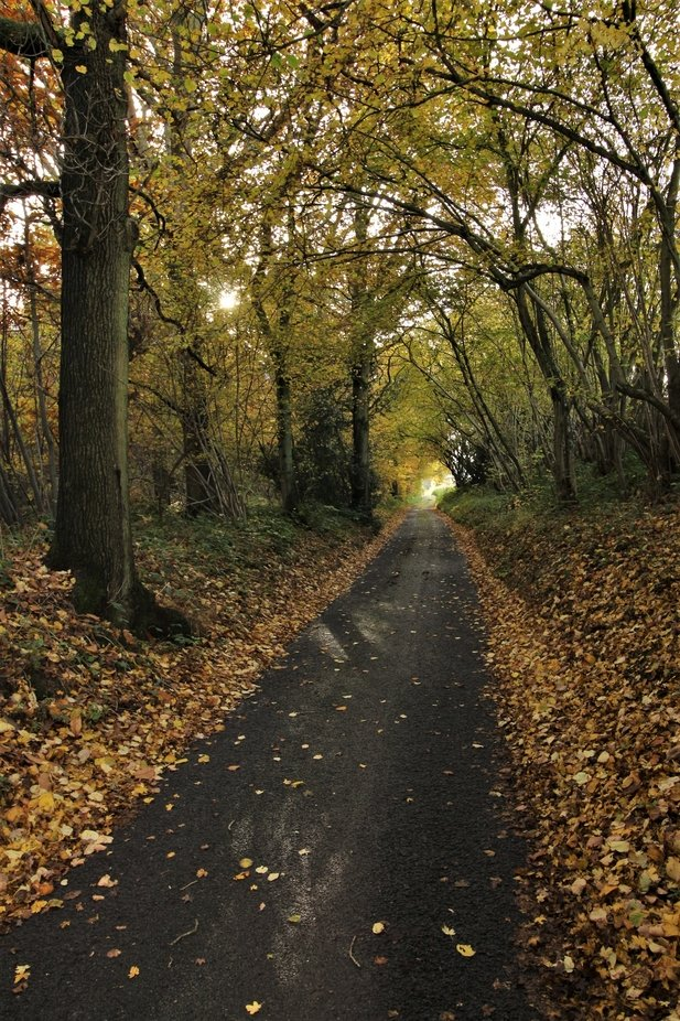 country lane by ismeghead - Straight Roads Photo Contest