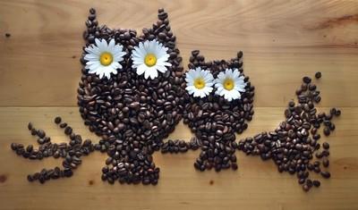 Daisy Coffee Owls