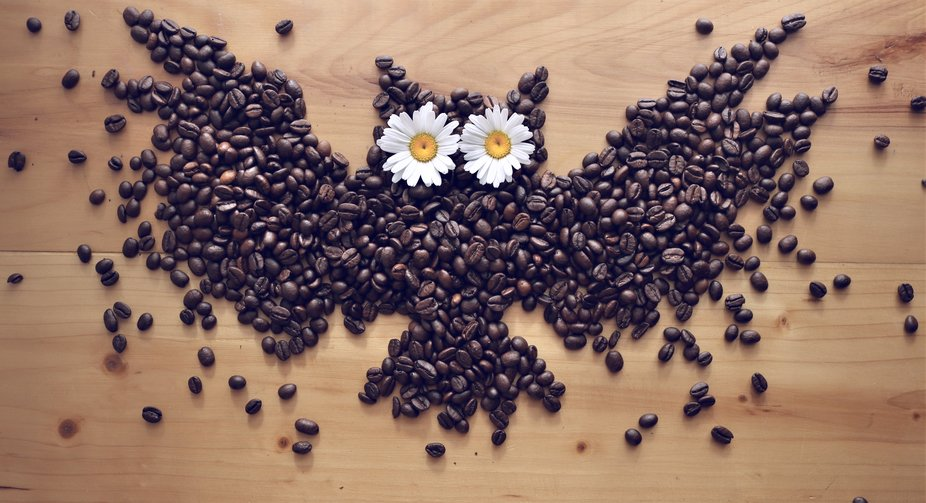 Combining three things i love.... Coffee, Nature, and owls.