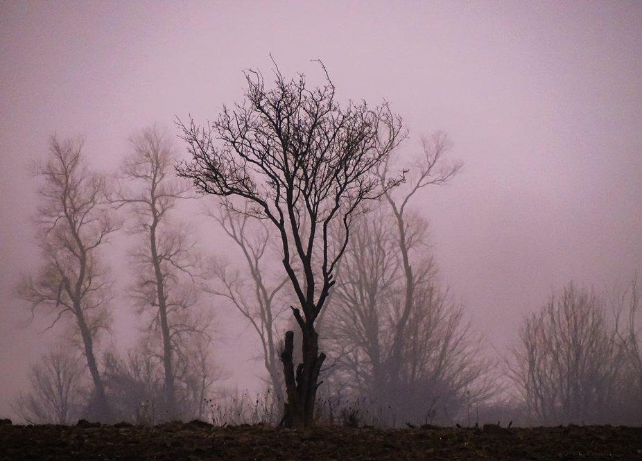 Misty violet glow