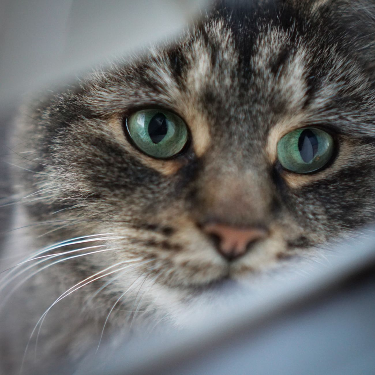 Cat looking through a gap in a window
