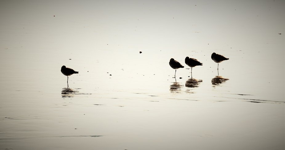 The sun was beginning to set when I saw this group of sea birds silhouetted in the waning light