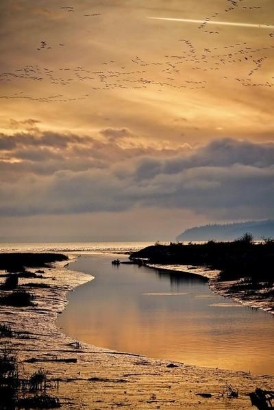 Fir Island at sunset