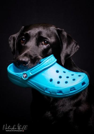 Crocs Thief
