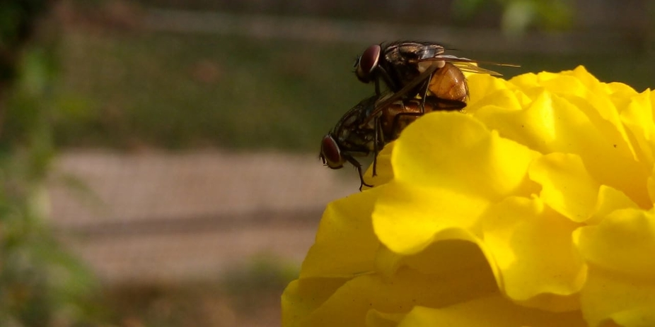 I was walking in my garden closely observing the marigolds and looking for a perfect shot. I came...