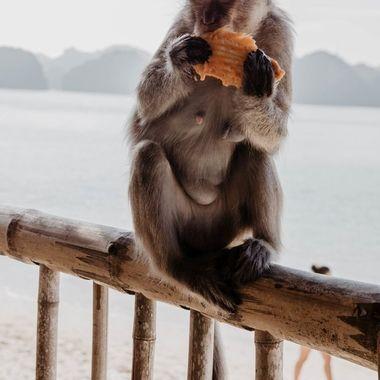 Momma monkey