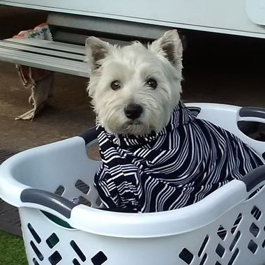 Hi...cosy in Nannys washing basket