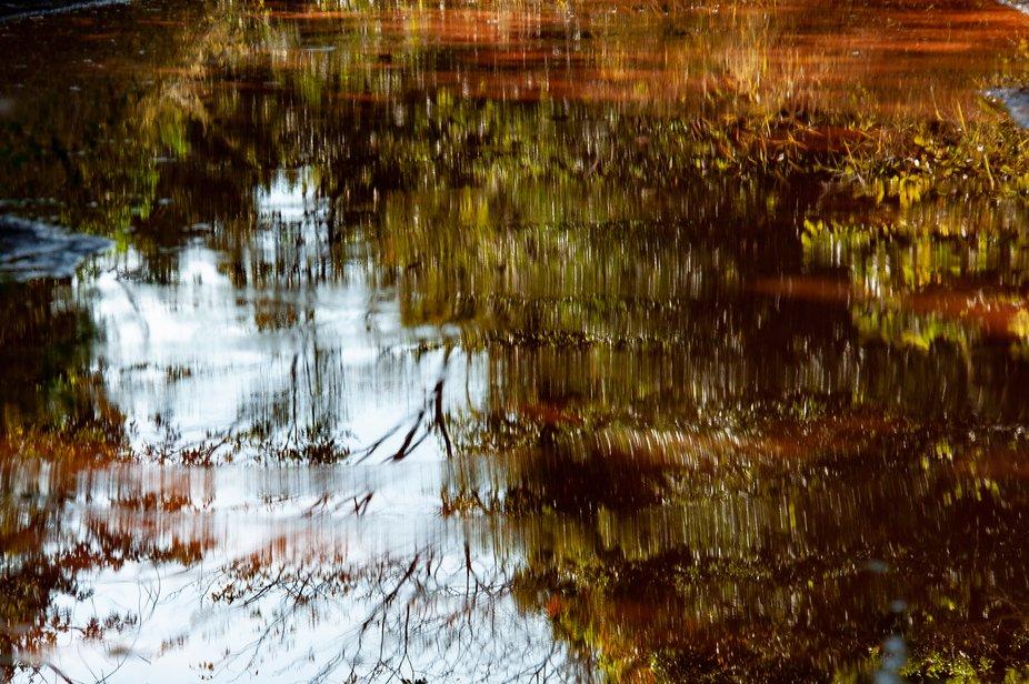 Autumm reflection color