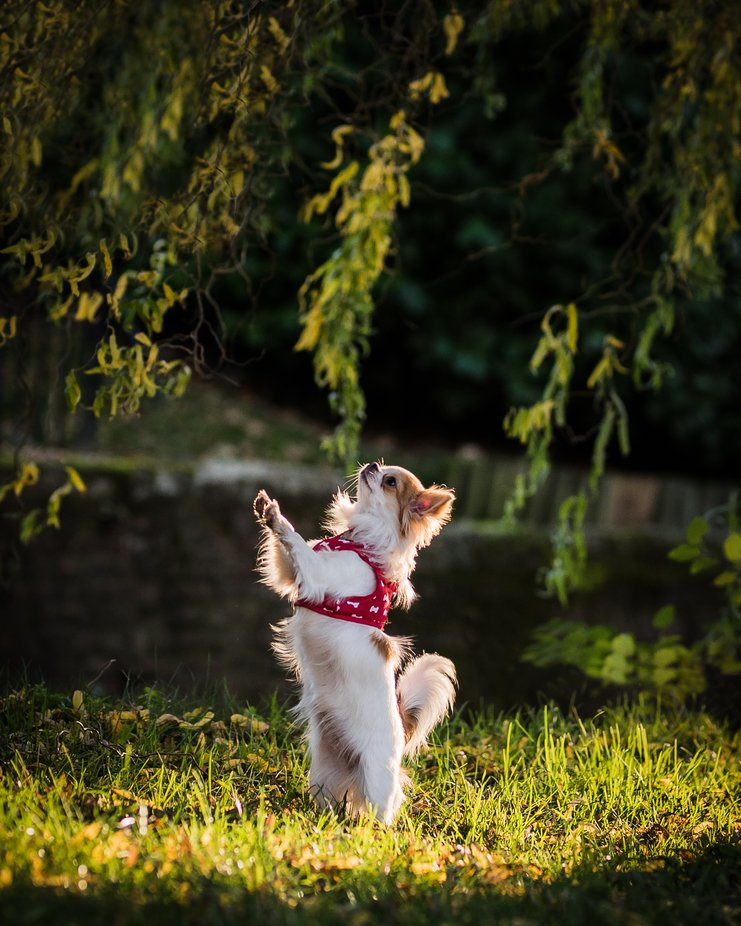 Lily by tanmorris - Dogs In Action Photo Contest