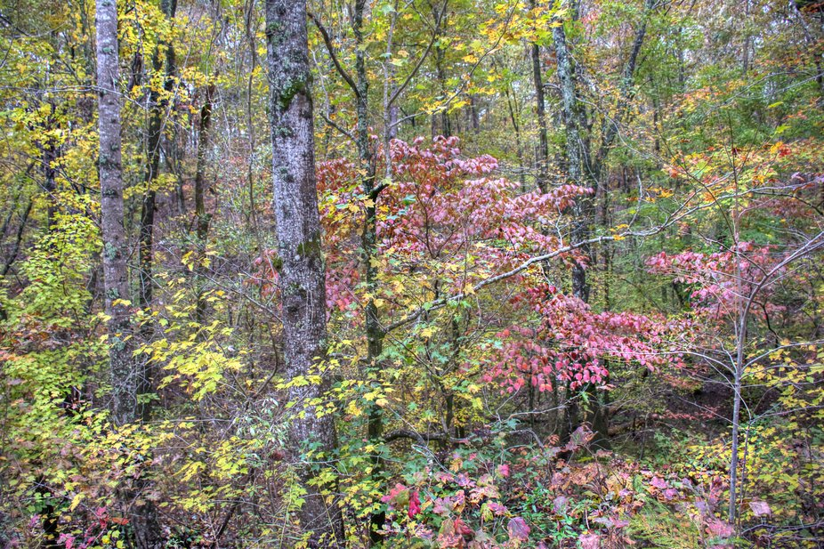 In the Shadow of Cheaha 16