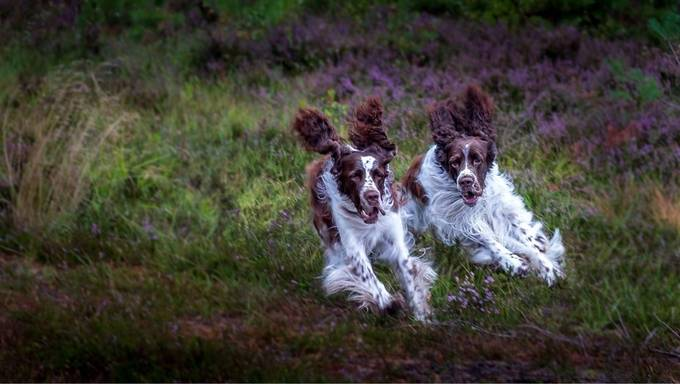 by Matsru - Dogs In Action Photo Contest
