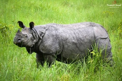 The Wild Rhino