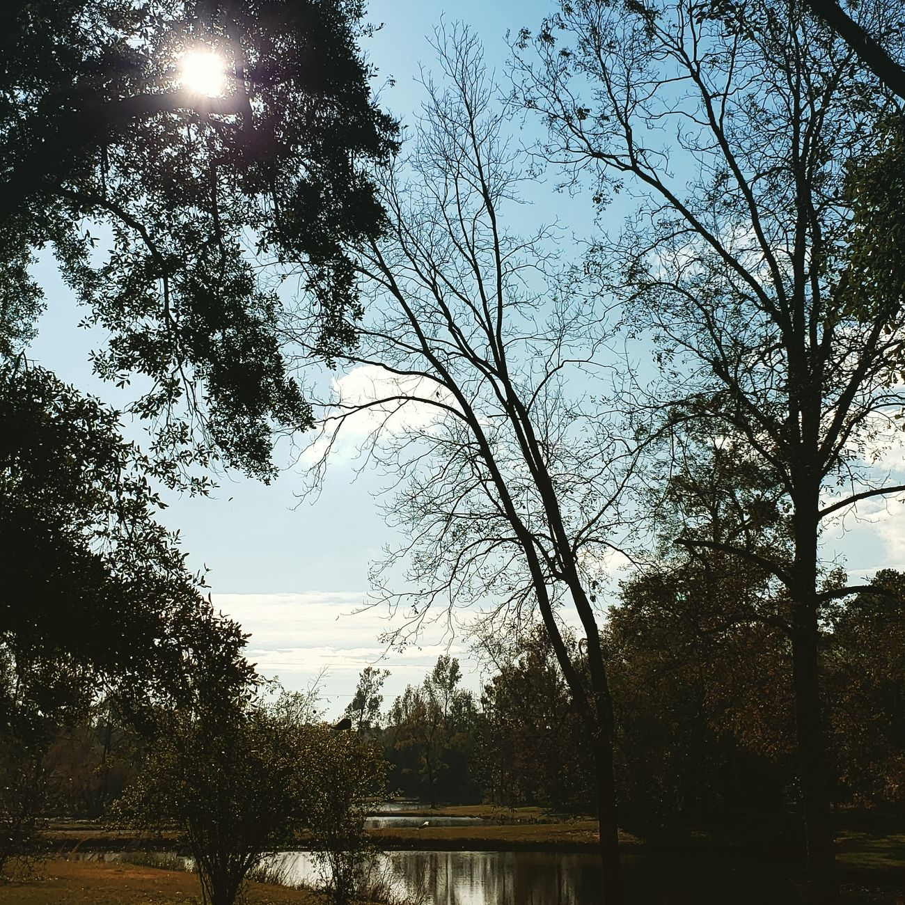 Beautiful afternoon in south Alabama