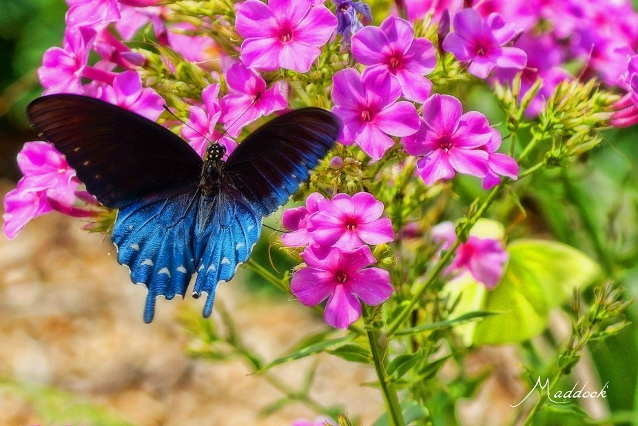 Summers last stand at color and bold butterflies