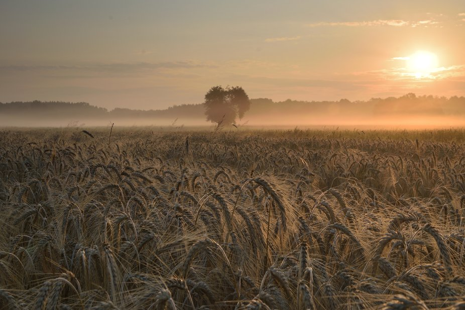 Wonderful and warm morning at the field in Poland.