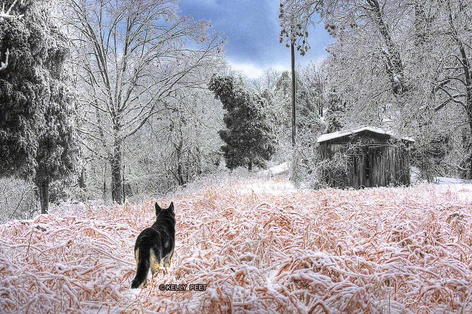 I took this photo after a severe ice storm hit the farm. The storm knocked out our power for almo...