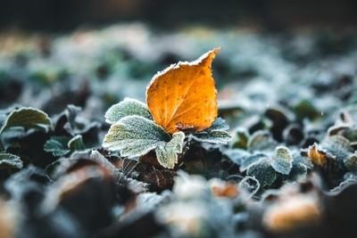 Freezing leaf