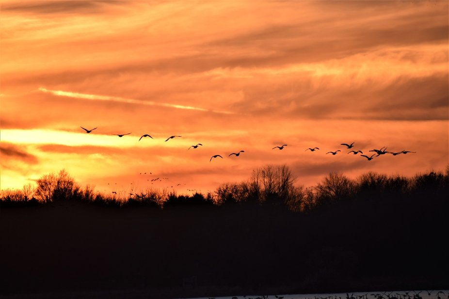 Canadian geese fly away from the lake at sunset.