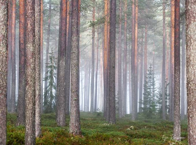 Forest by haksu - Tall Trees Photo Contest