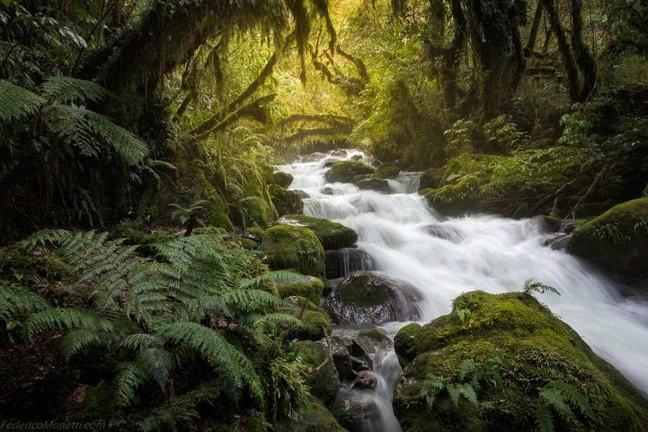 Silver River, 2018. The enchanted forests of Fiordland National Park are crossed by many rivers a...