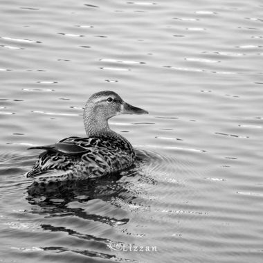 MonoChrome Mania is a collection of my favourite B&W images #MonoChromeMania